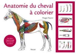 Anatomie du Cheval